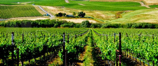California Vineyard – Off the Beaten Path