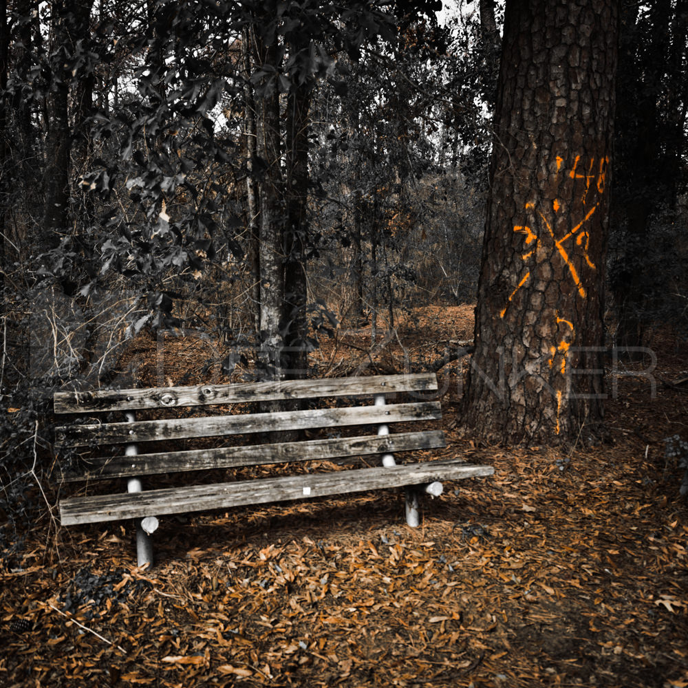 Memorial Marked Pine next to a bench in 2012 by Houston Commercial Architectural Photographer Dee Zunker